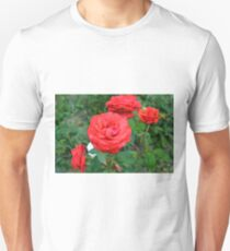 Red roses, natural background. T-Shirt
