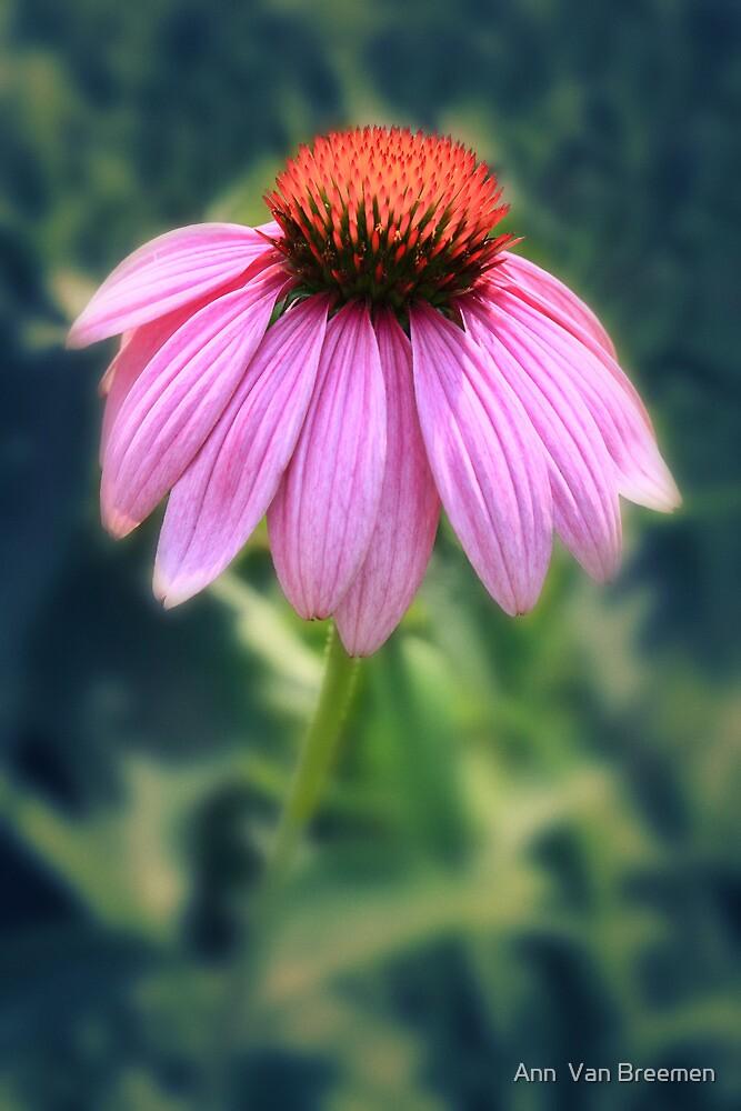 Pretty in Purple by Ann  Van Breemen