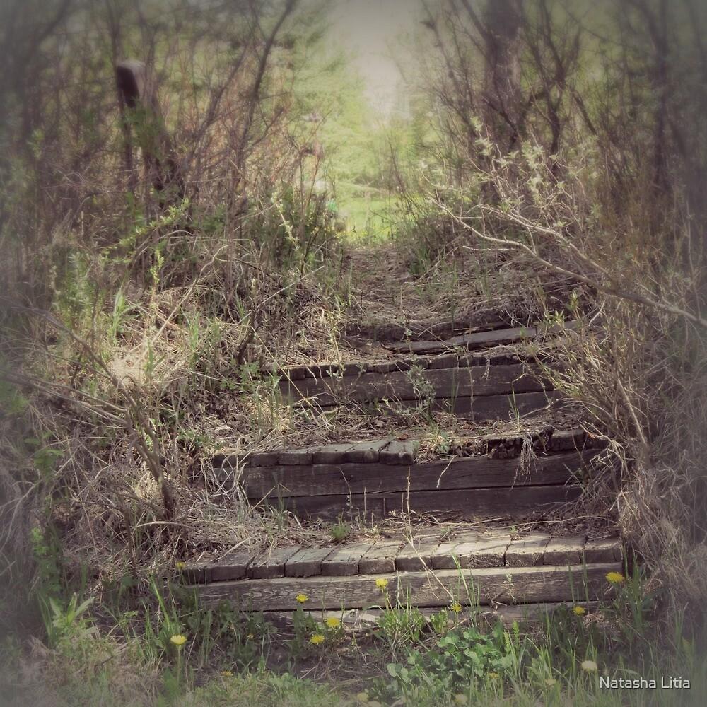 Wooden stairs  by Natasha Litia
