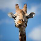 Giraffe by perfectexposure