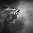 Shadows and Light - Fine Art Horse Photography by Michelle Wrighton