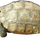 Tortoise by Colin Bentham