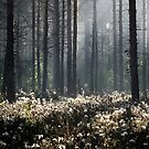 9.6.2014: Wild Rosemary Flowers in Forest by Petri Volanen