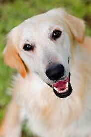 Dog Training in Northern Virginia by seobacklink44