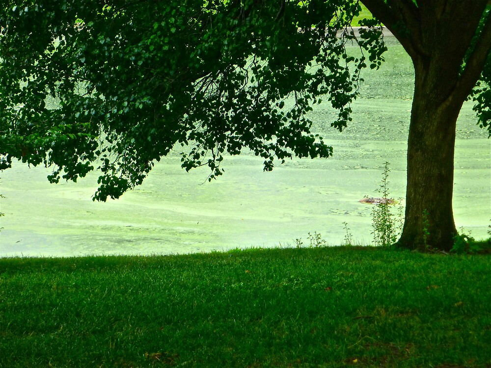 Green Park of Southern Illinois by MadisonStone