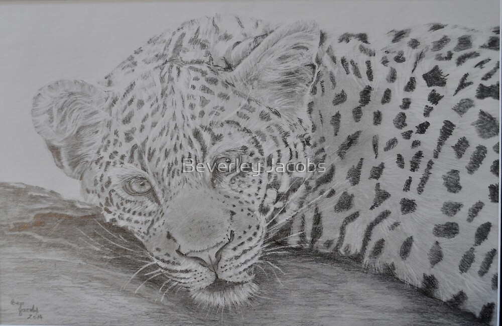 Leopard at Leisure by Beverley Jacobs
