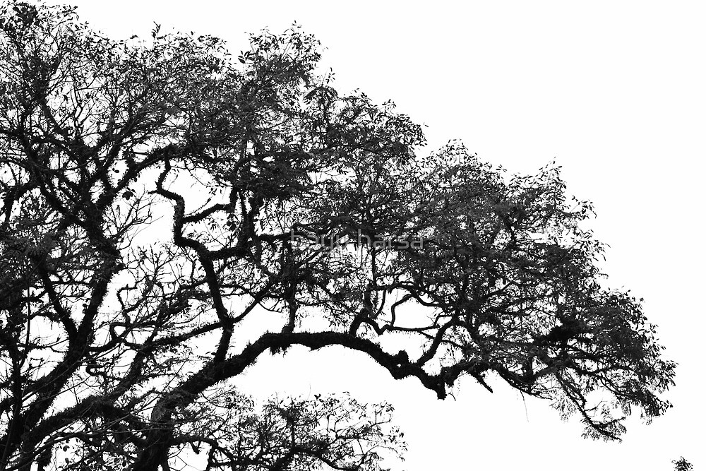 tree branches by bayu harsa