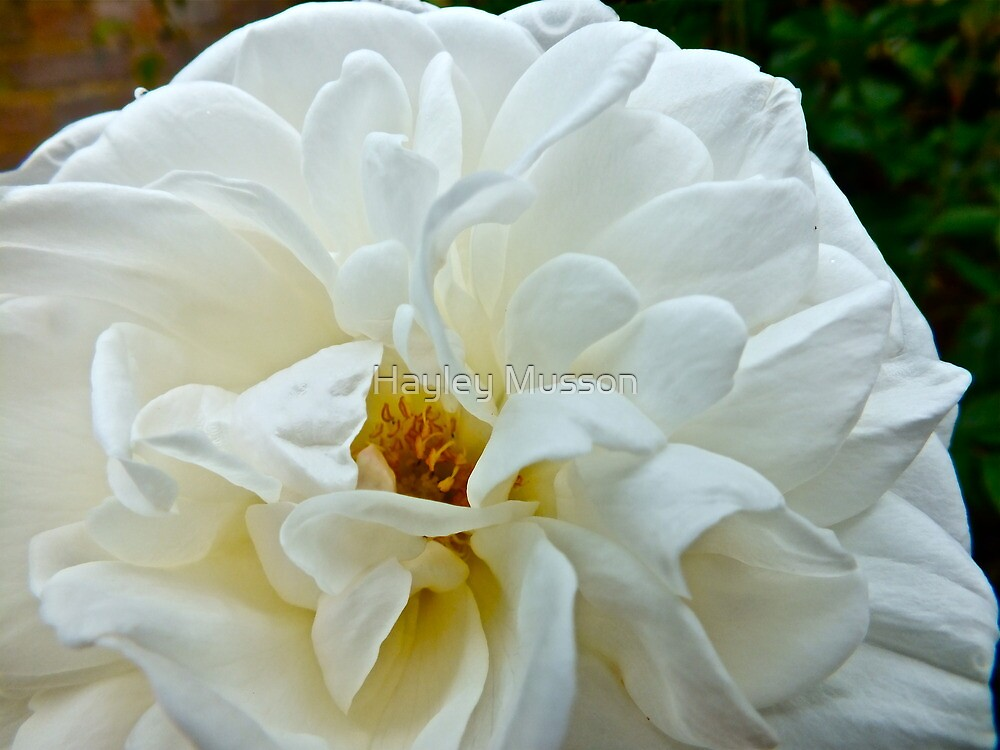 In the Rose Garden (2) by Hayley Musson