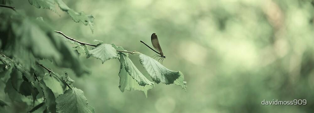 Dragonfly by davidmoss909