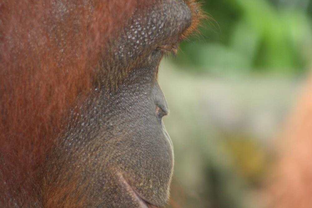 Orangutan by Kylie Epskamp