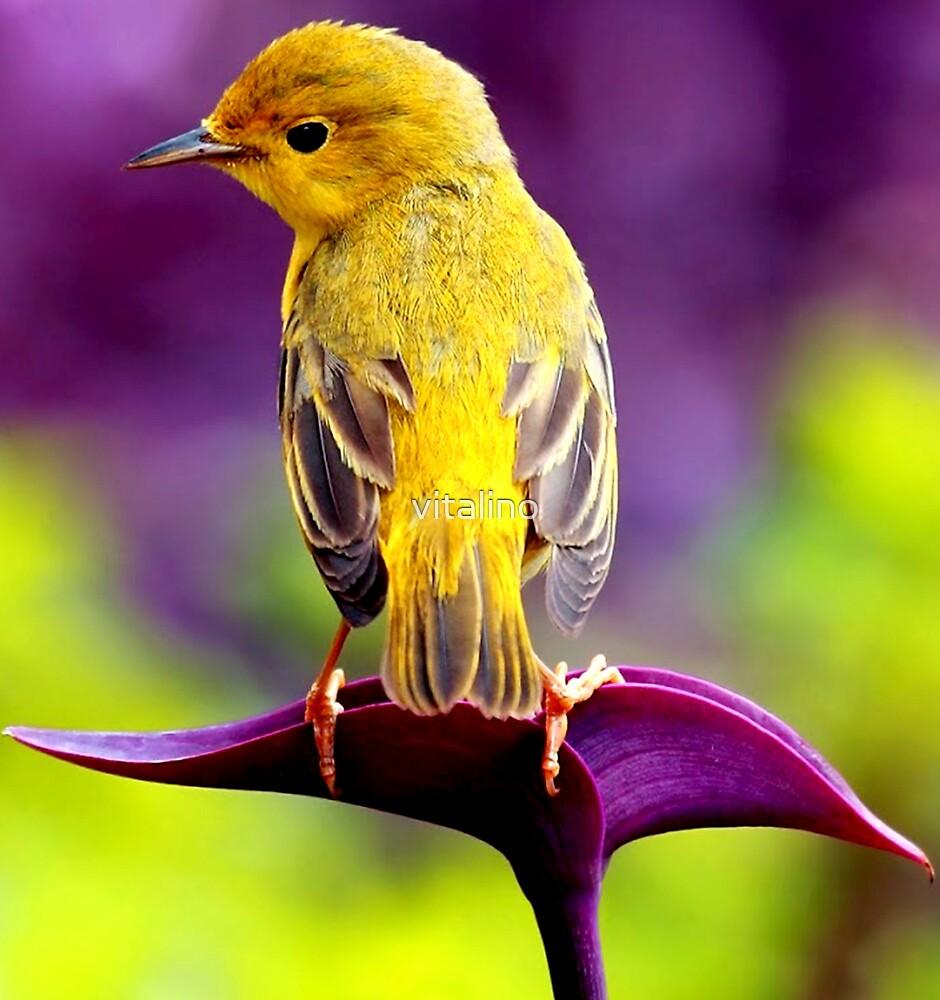 Yellow Bird in Purple Flower by vitalino