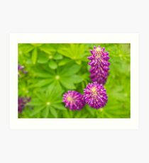 Lupins Expressed Art Print