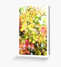 Autumn Virginia Creeper Greeting Card