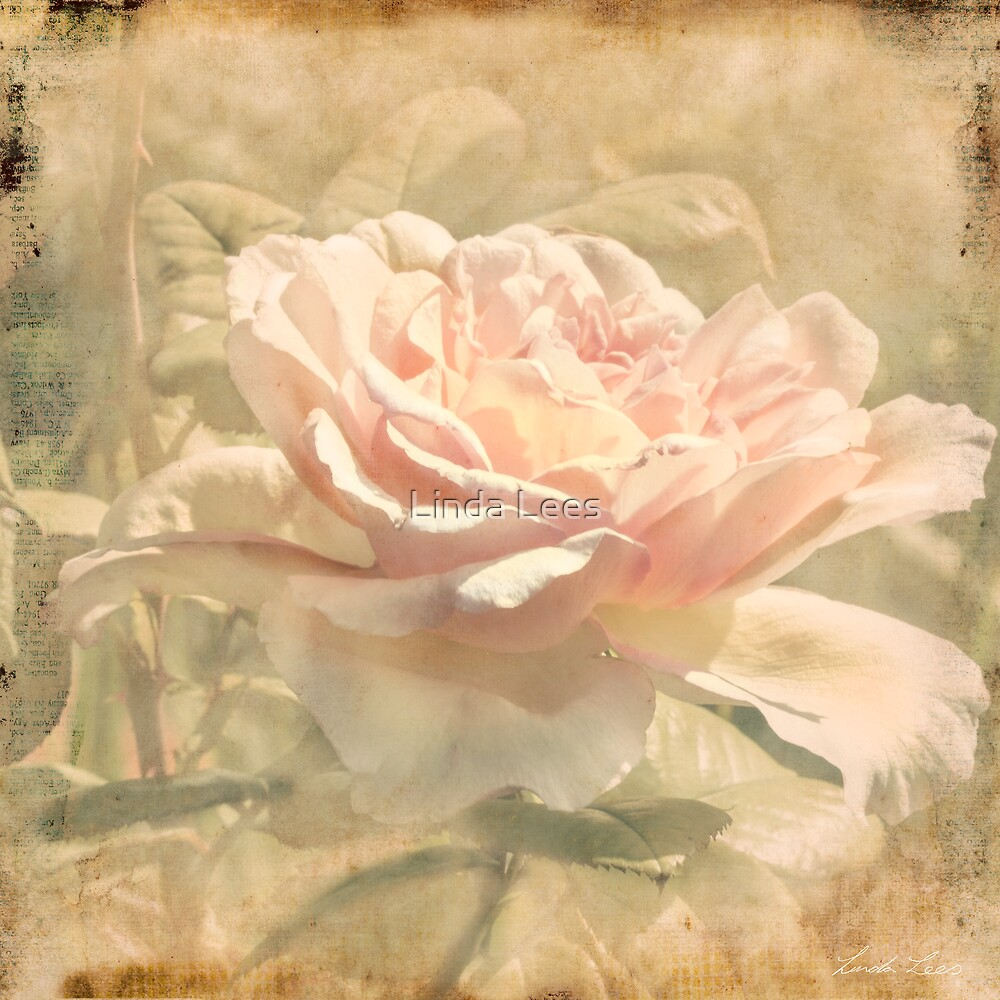 Secondhand Rose by Linda Lees