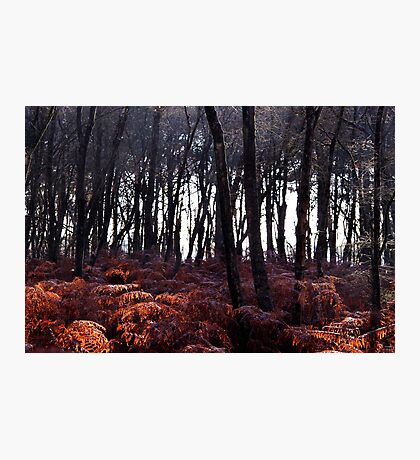 Autumn Morning - Bucklebury Photographic Print