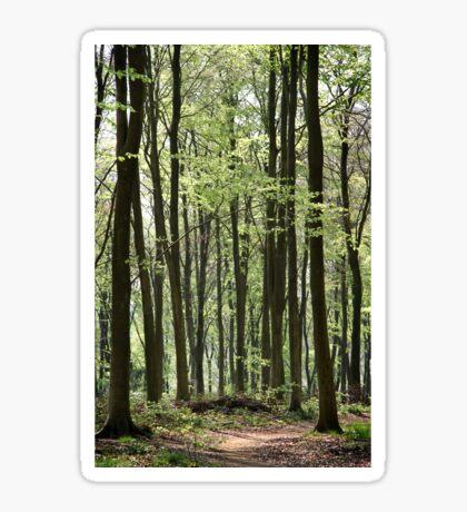 Path Through The Wood Sticker