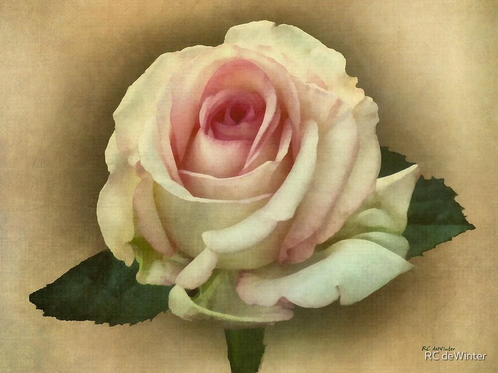 Victorian Blush by RC deWinter