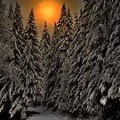 Road In The Snow by Charles & Patricia   Harkins ~ Picture Oregon