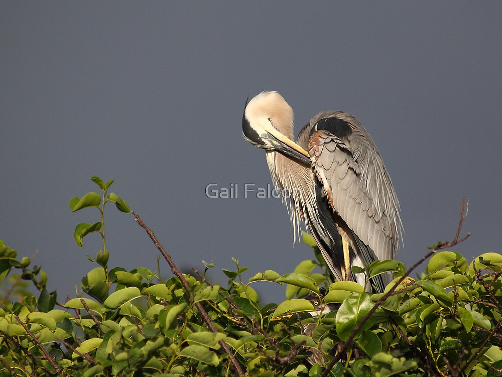 Cleaning Up After The Storm by Gail Falcon