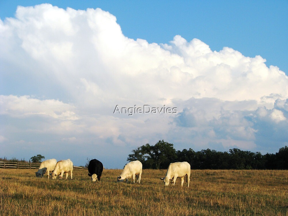 On A Summer Afternoon In The Country by AngieDavies