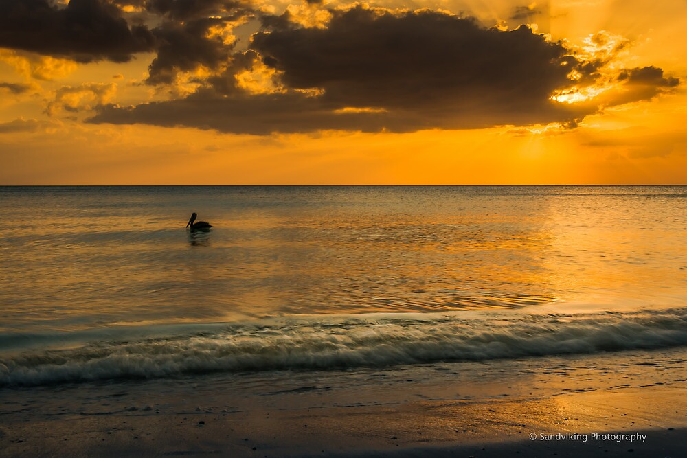 PELICAN AT SUNSET by George Trimmer