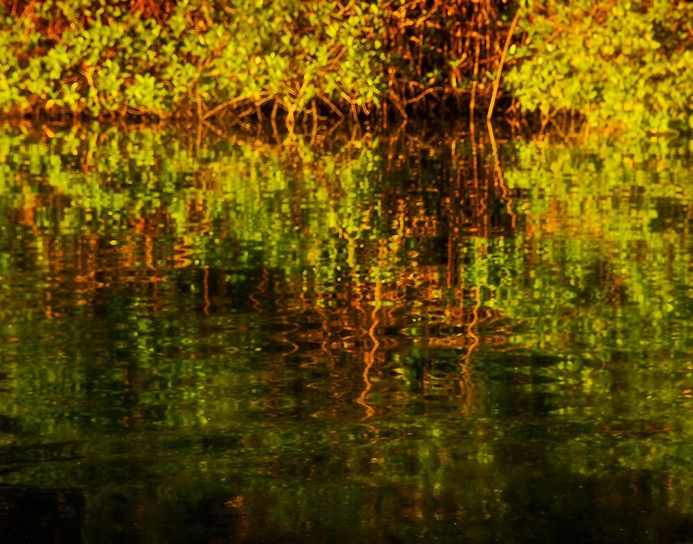 Reflections of Mangrove swamp by Yukondick