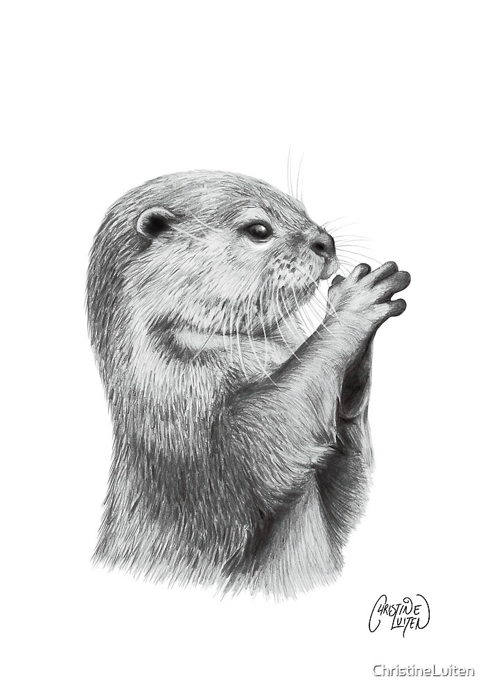 Otter Pencil Sketch by ChristineLuiten
