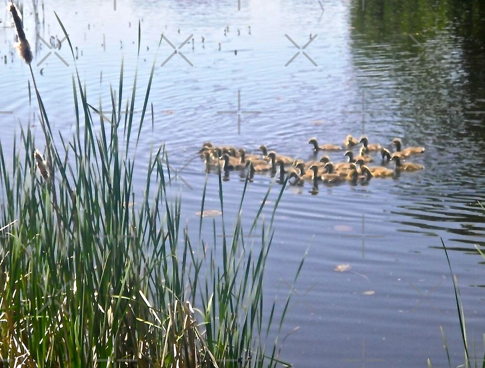 A Gaggle of Goslings by Shulie1