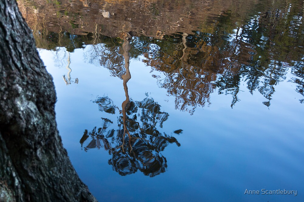 tree reflected by Anne Scantlebury