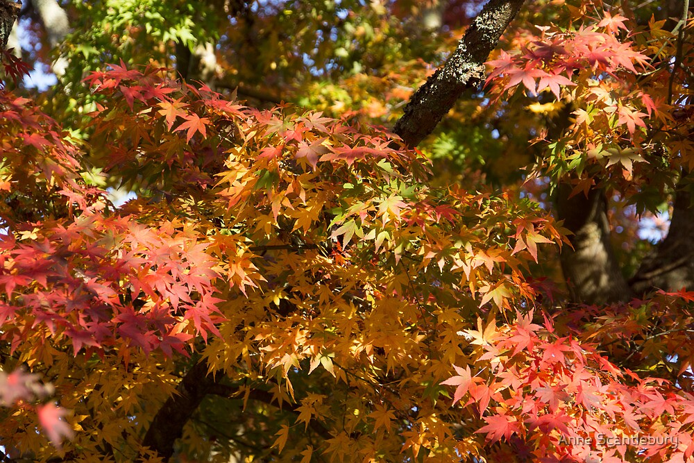 autumn colors by Anne Scantlebury