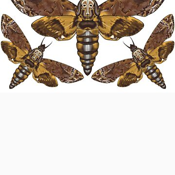 Acherontia Deaths Head Moth by jwelsh5