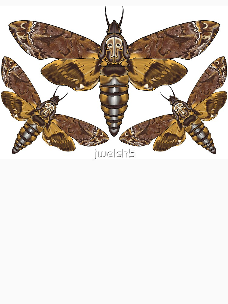 Acherontia Deaths Head Moth by jwelsh5