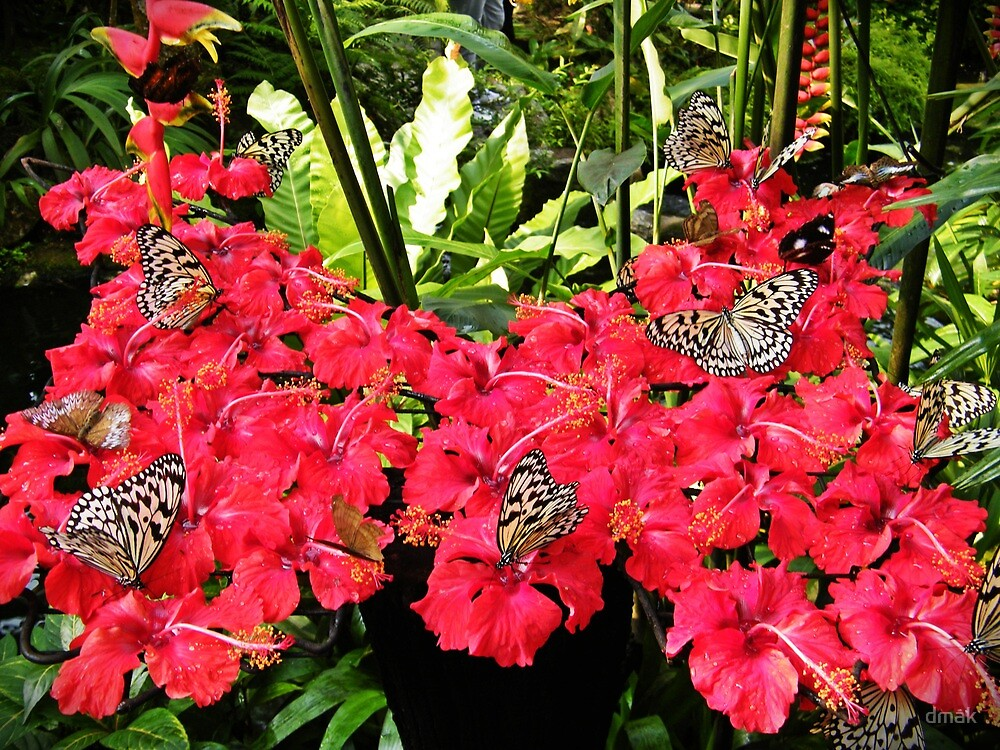 Butterflies know best by dmak