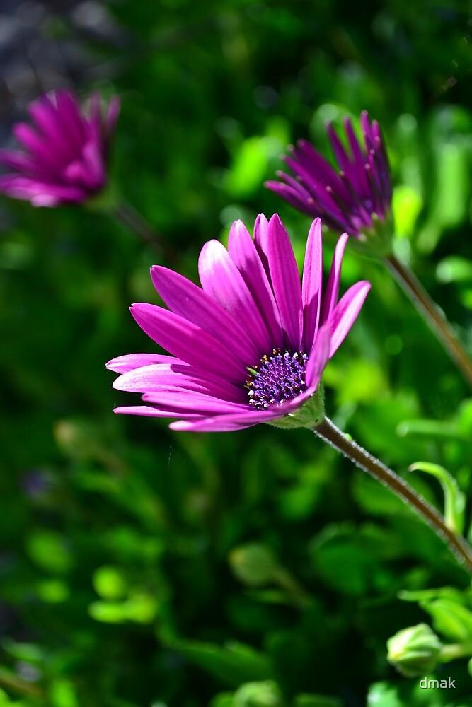 Plain pretty purple by dmak