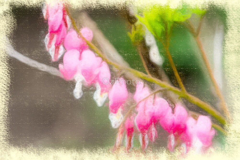 String of Hearts by OzPhoto