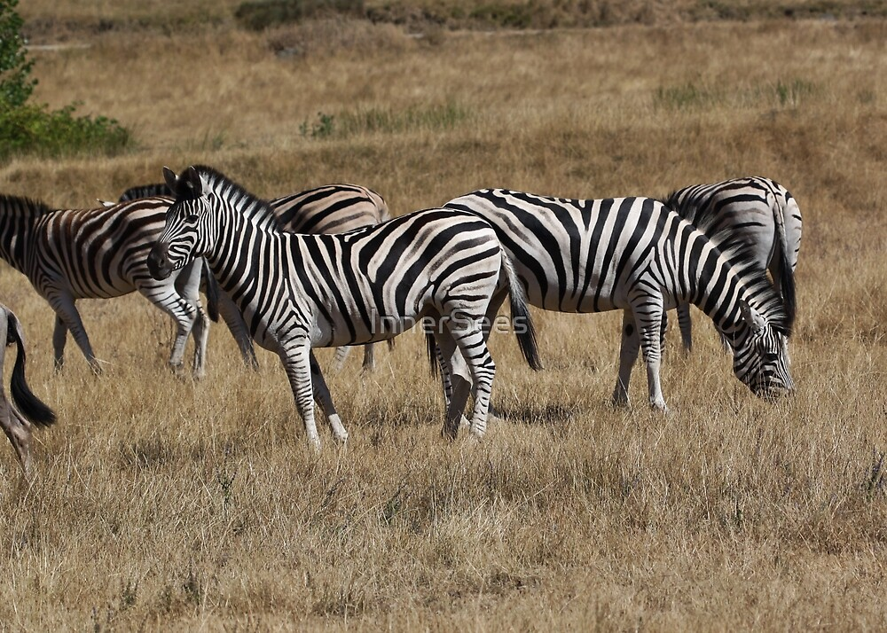 Zebra & Wildebeest by InnerSees