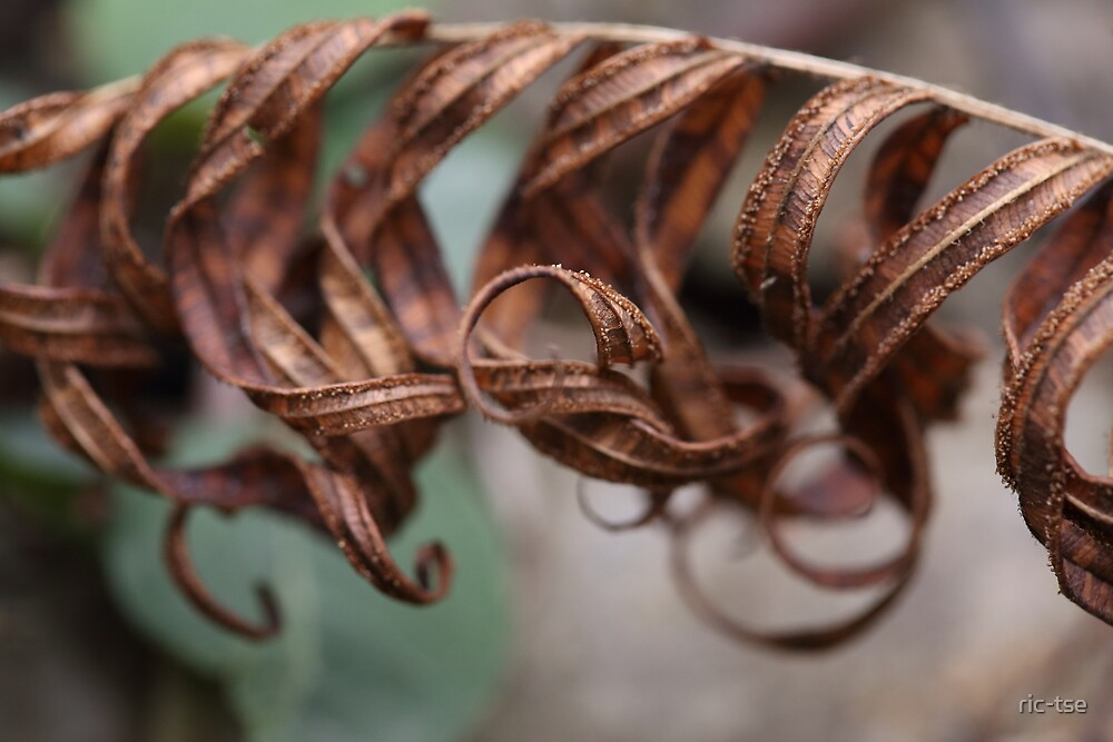 Metallic Leaf by ric-tse