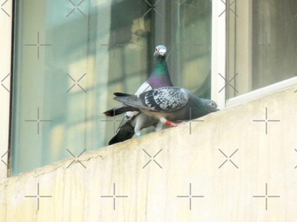 peace&pigeon by LisaBeth