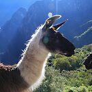 Llama by KerryPurnell