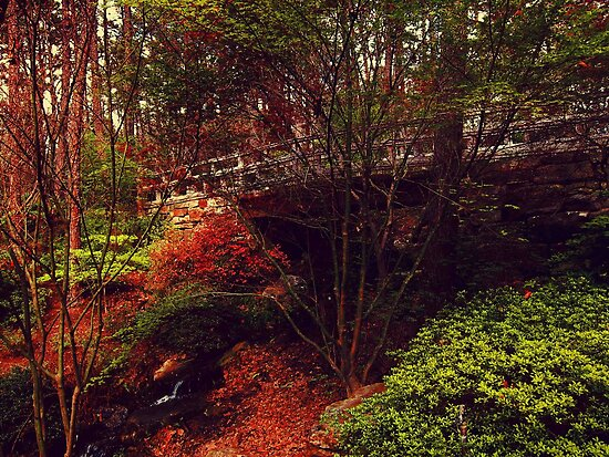 In The Red Forest by alyphoto