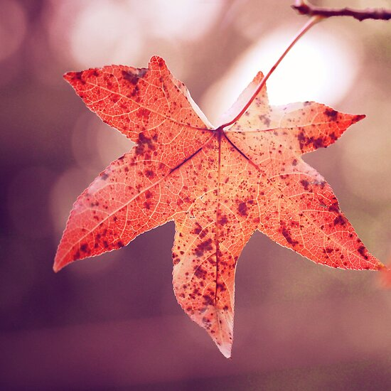 Fall by alyphoto