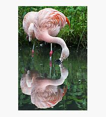 Zaphod Flamingbrox Photographic Print