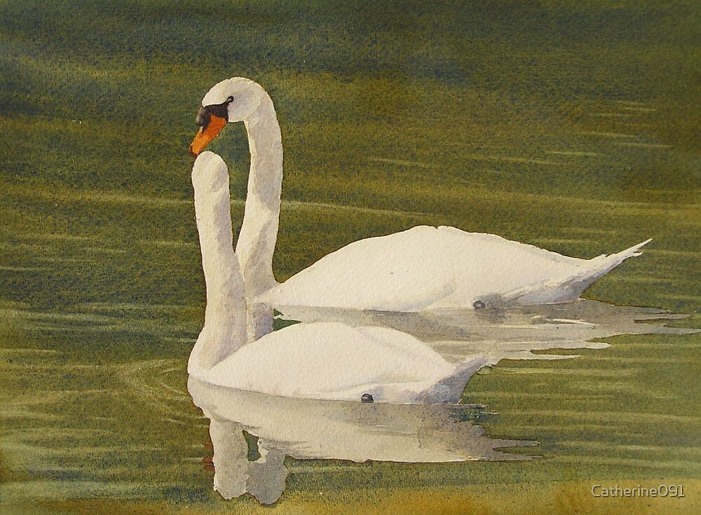 Swans on Cross Lake by Catherine091