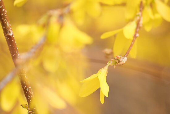 Yellow Morning by HeatherWSmith
