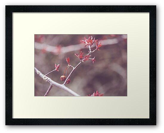 Red Oak by HeatherWSmith