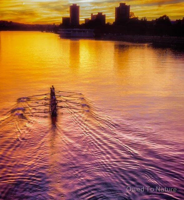 Rowing for Gold by Owed To Nature