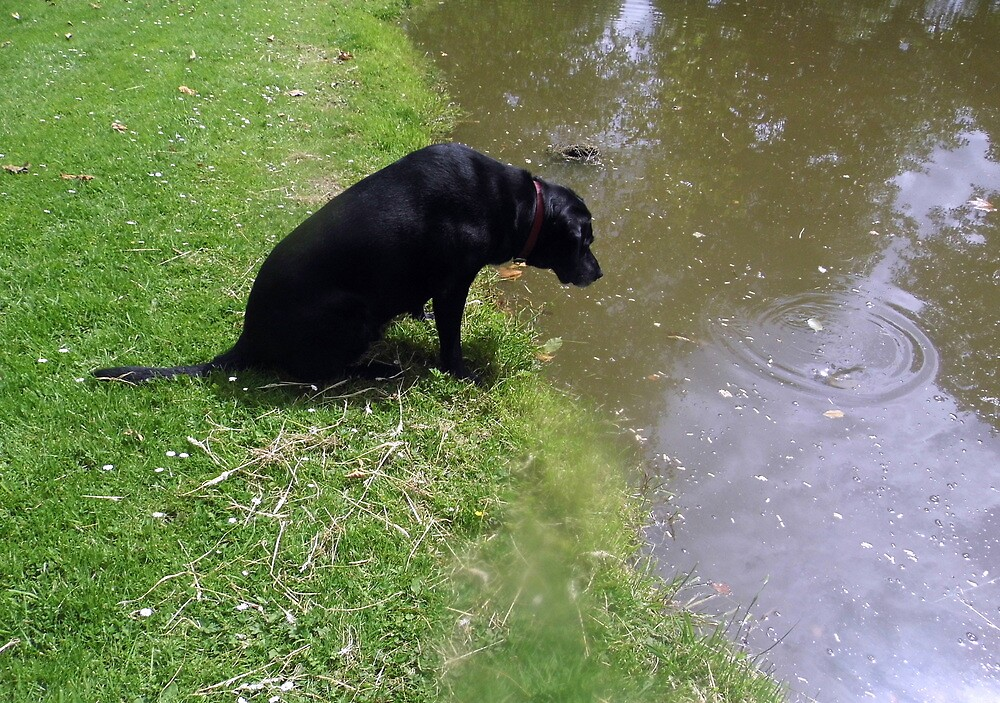 jake watching that fishy ring in the water by margaret hanks