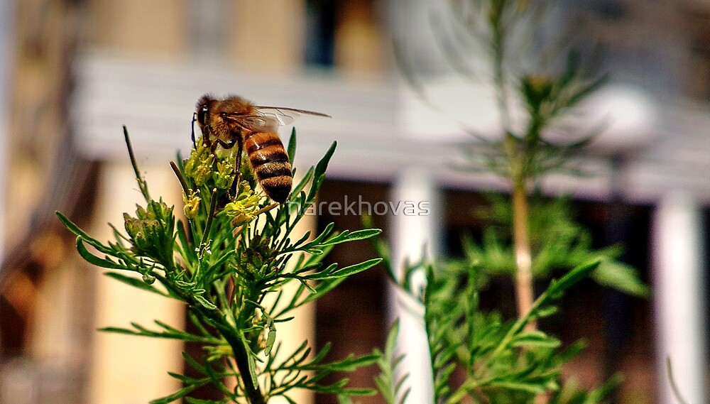 Bee by narekhovas