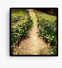 Path of Flowers in Bloom Canvas Print