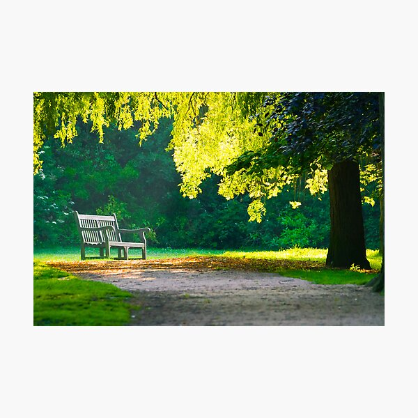 A lonely bench Photographic Print